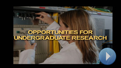 Research Opportunities in Electrical Engineering